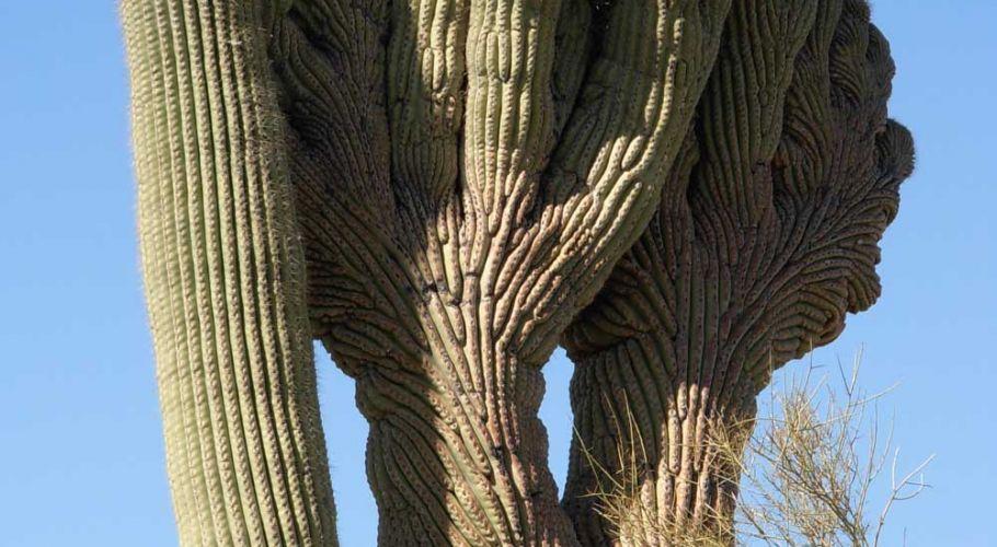 nature-cactus1