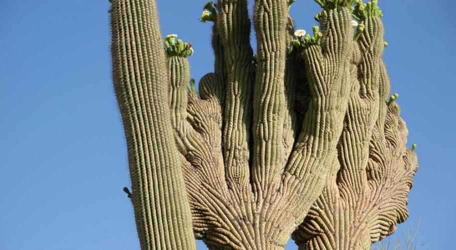 nature-cactus2