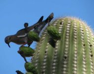 nature-cactus-bird